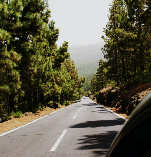 driving down a road in a forest